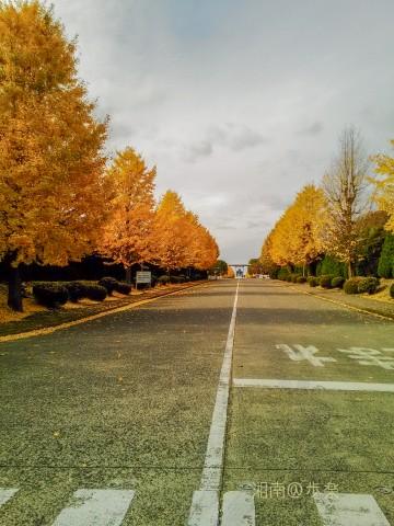 黄色系統の銀杏は今でも鮮明